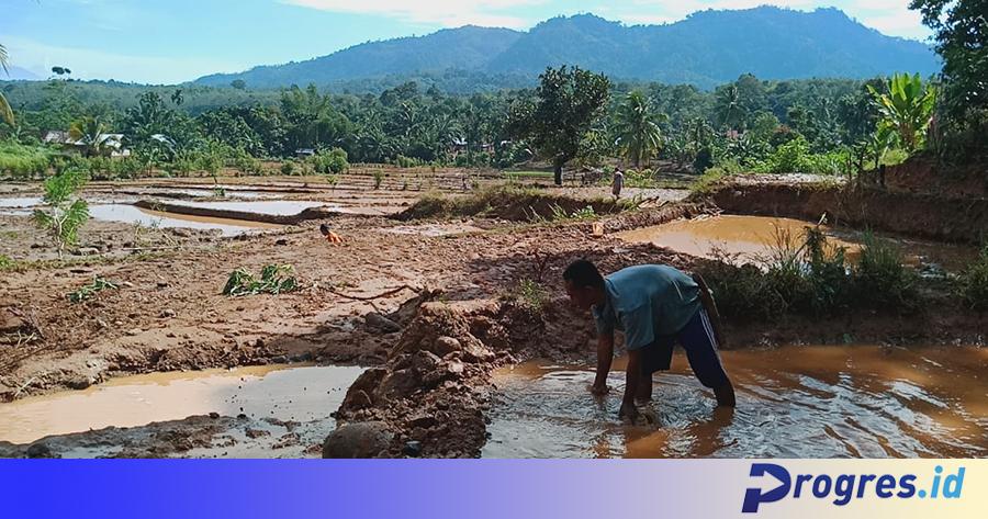 sawah banjir