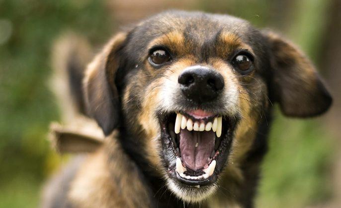 Ilustrasi anjing rabies
